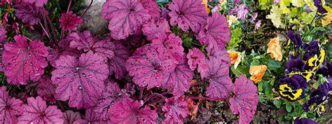 fioriere colorate due fioriere colorate in terrazzo cose di casa