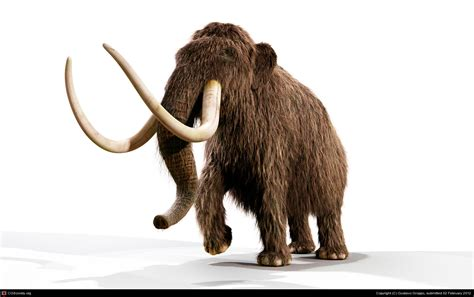mammoth images mammoth history and some interesting facts