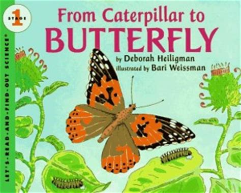 backyard bugs 101 flashcards for discovering insects books 19 books about bugs