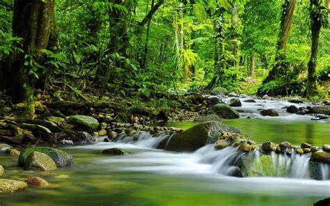 tropical rain forest mountain stream rocks water trees