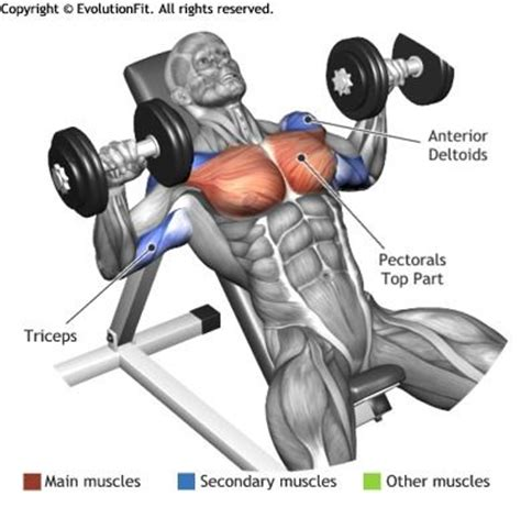 muscles used bench press chest dumbbell inclined bench press lower abs