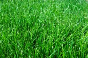blog lush eco lawns