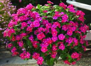 Gift Baskets For Delivery Vinca Cora Cascade Trailing Cherry 125mm Pot Dawsons Garden World
