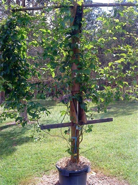 forum shade tolerant fruit tree - Shade Tolerant Fruit Trees