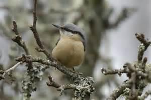 26 et 27 janvier on compte les oiseaux des jardins