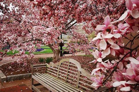 piccoli giardini fioriti giardini fioriti crea giardino realizzare un giardino