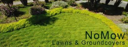 Eco grass low maintenance lawn alternative photos