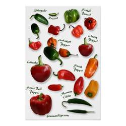 chilli varieties wall art zazzle