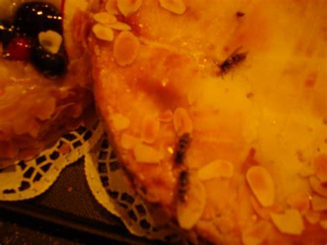 bild auf kuchen wespen oder zwetschgen kuchen hygenier