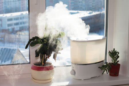 High Humidity In Bedroom by 5 Plants That Will Absorb Excess Humidity In Your House