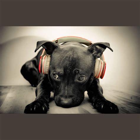 house music cd 2014 deep house v 5 from kulemina cd2 mp3 buy full tracklist