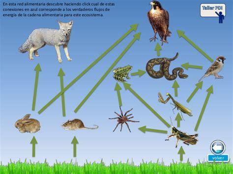 cadena alimenticia la animales la cadena alimentaria