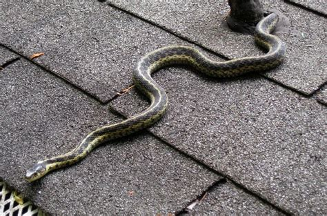 How To Keep Snakes Away From Your Yard And Chicken Coop