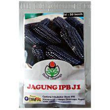 Benih Bunga Marigold Maharani 10s cara memulai usaha pertanian organik bibitbunga