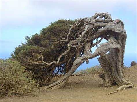 amazing tree top 10 amazing trees xcitefun net