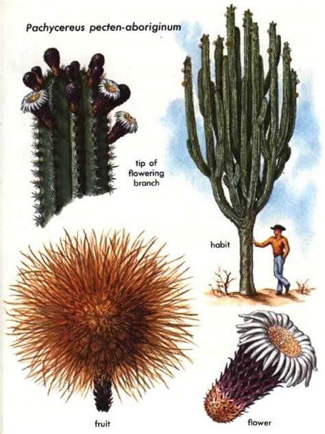 erowid  books golden guide hallucinogenic plants