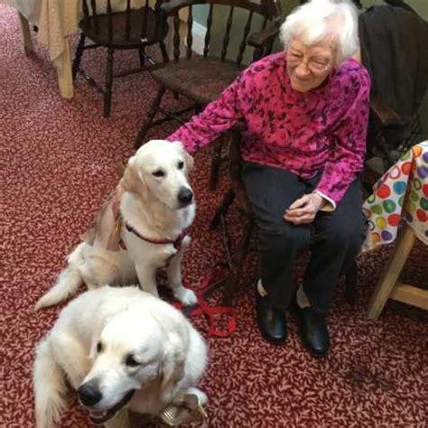 golden retriever ottawa glenbern golden retriever therapy dogs dugan visiting at seniors residence