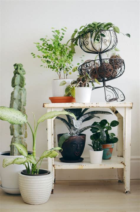 indoor plans tips for keeping indoor plants alive a beautiful mess