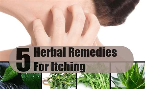 best herbal remedies for itching how to treat itching