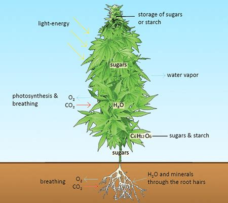 how much light does a plant need how much light does a plant need 28 images how