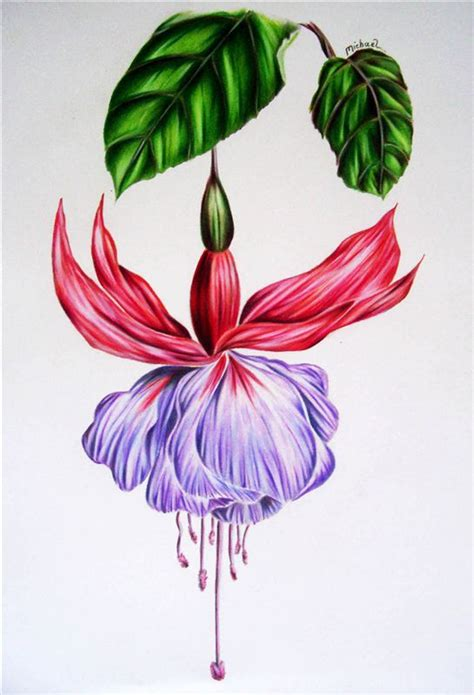 0007275528 botanical painting with coloured pencils brilliant floral portraits with coloured pencils