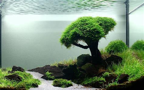 Take a look at this photo aquarium landscape design photo