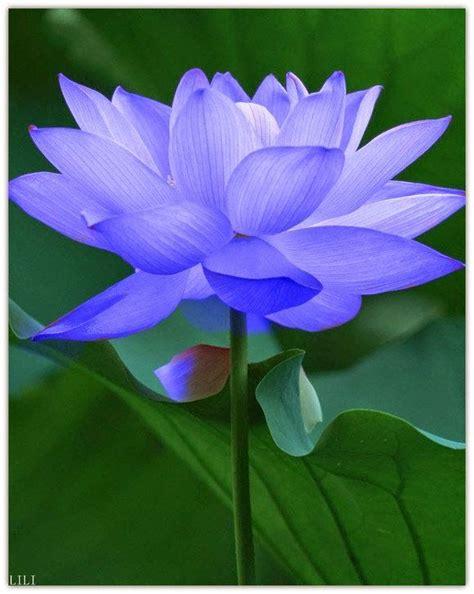 International Flower Delivery by 25 Best Ideas About International Flower Delivery On