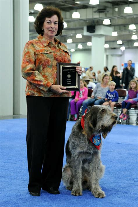 american kennel club breeds friedman photos photos american kennel club quot meet the breeds quot event at the jacob javits