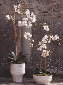 d 233 coration sia fleurs c 244 t 233 cour