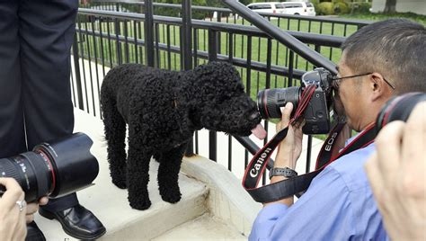 dog wont stop pooping in house obama s dog won t stop pooping in the white house dogtime