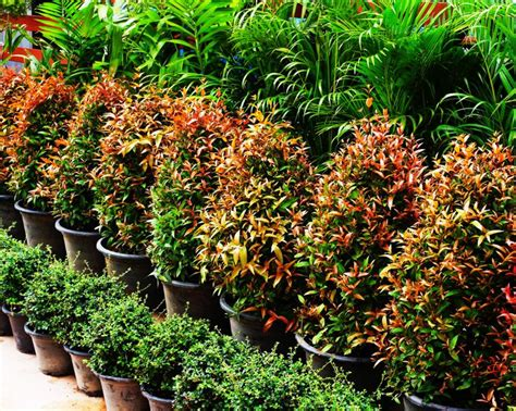ornamental plants economic cooperative ornamental plants and various seeds