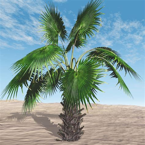 palm tree fan blades mexican fan palm tree 3d models bijan studio