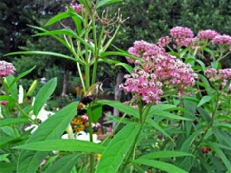 flowering shrubs michigan 1000 images about michigan plants on