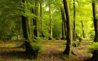 woodland tree nigeria to review forest policies information nigeria