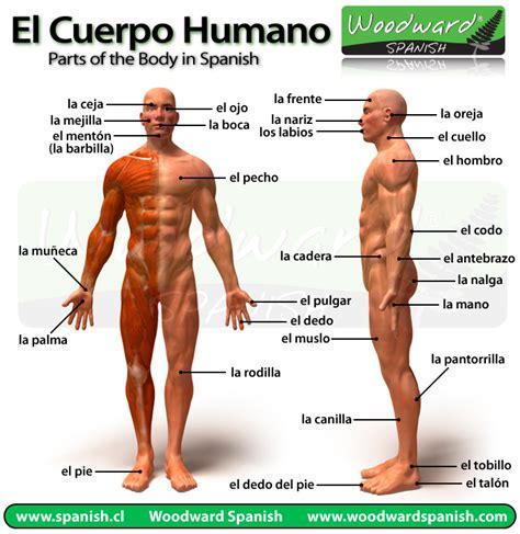 el cuerpo humano partes del cuerpo vocabulario woodward spanish