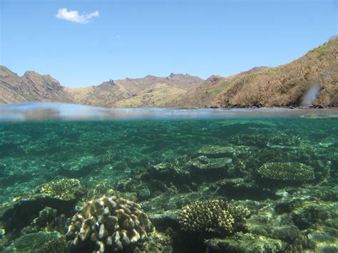 Home Designs In Queensland by Saving Fiji S Coral Reefs Linked To Forest Conservation