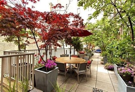 alberi da terrazzo soleggiato piante da balcone resistenti piante da terrazzo