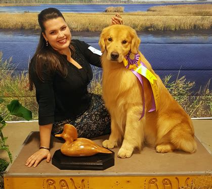 hudson valley golden retriever club potomac valley golden retriever club friday march 2 2018 canine chronicle