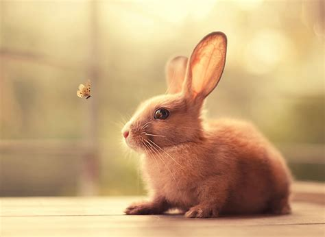 can eat apple can rabbits eat apples let s find the answer here