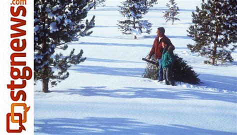 cut christmas tree utah cut your own tree permits safety tips dixie fishlake and kaibab national