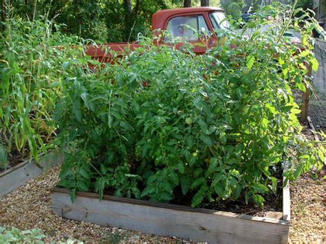 Raised Tomato Planter by The Basics Of Tomato Flavor Bonnie Plants