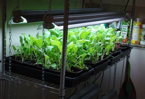 ultimate indoor vegetable gardening guide