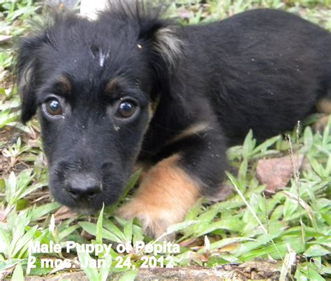cares support these abandoned puppies