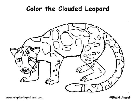 leopard coloring pages pdf clouded leopard exploring nature educational resource