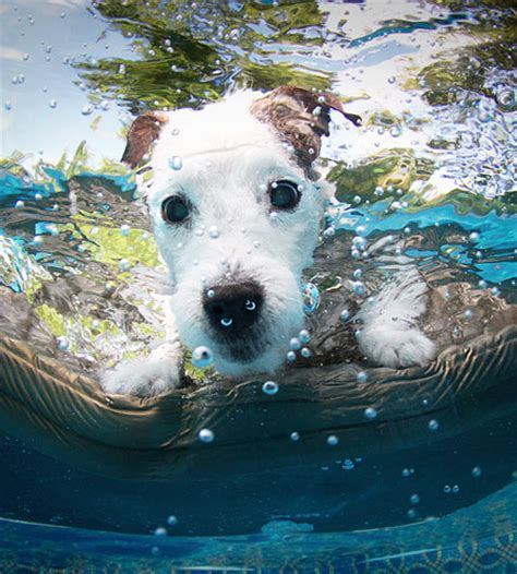 puppies underwater underwater dogs