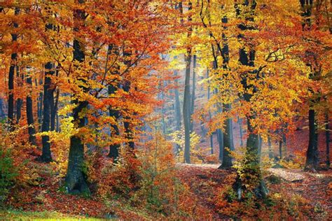 Woods L Day Of Fall 2016 Autumnal Equinox Dates Times Photos