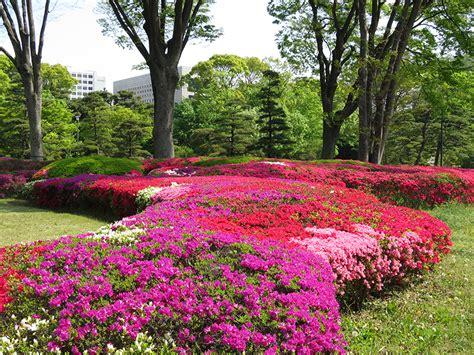 azaleas for the win jonelle s only in japan