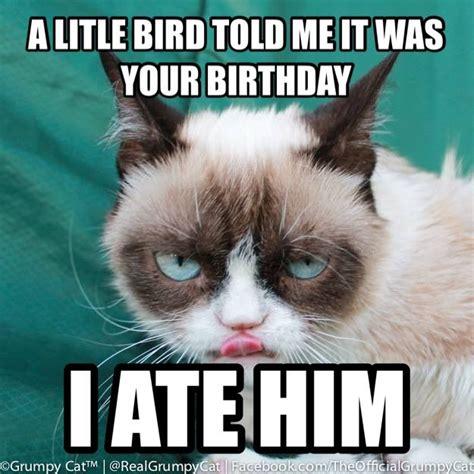 Birthday Grumpy Cat Meme - grumpy cat grumpy cat pinterest