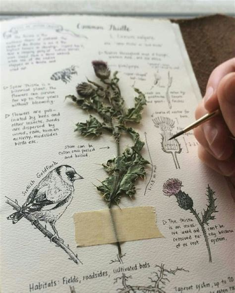 Drawing Journal Ideas by 5377 Best Images About Journaling On