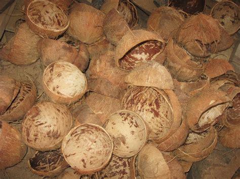 Jual Batok Kelapa Kering proses pengolahan limbah proses pengolahan batok kelapa